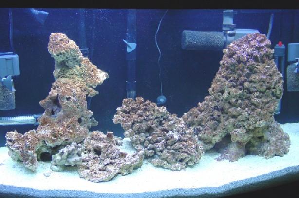Diatoms/Brown algae? - Aquarium Advice - Aquarium Forum ...