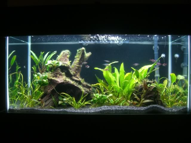 New fish ideas for my 50 gal aquarium advice aquarium for 50 gallon fish tank