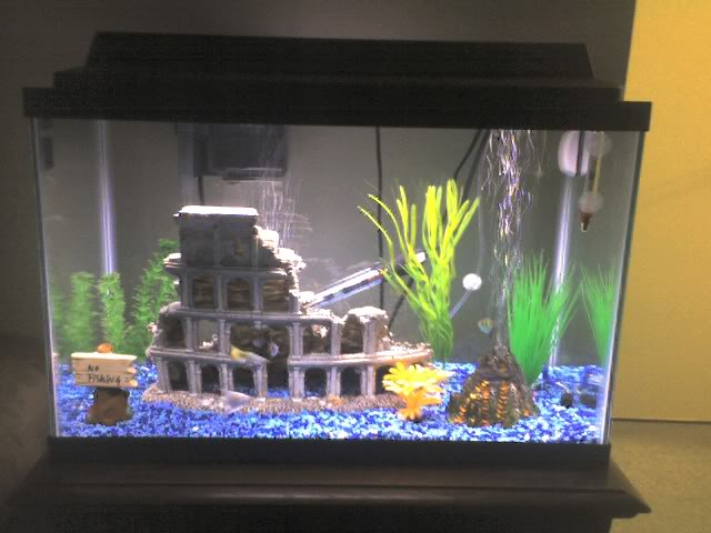 20 gallon light recommendations aquarium advice for How much is a fish tank