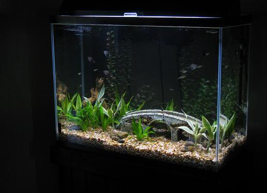 37 Gallon Aquarium 1000 Aquarium Ideas