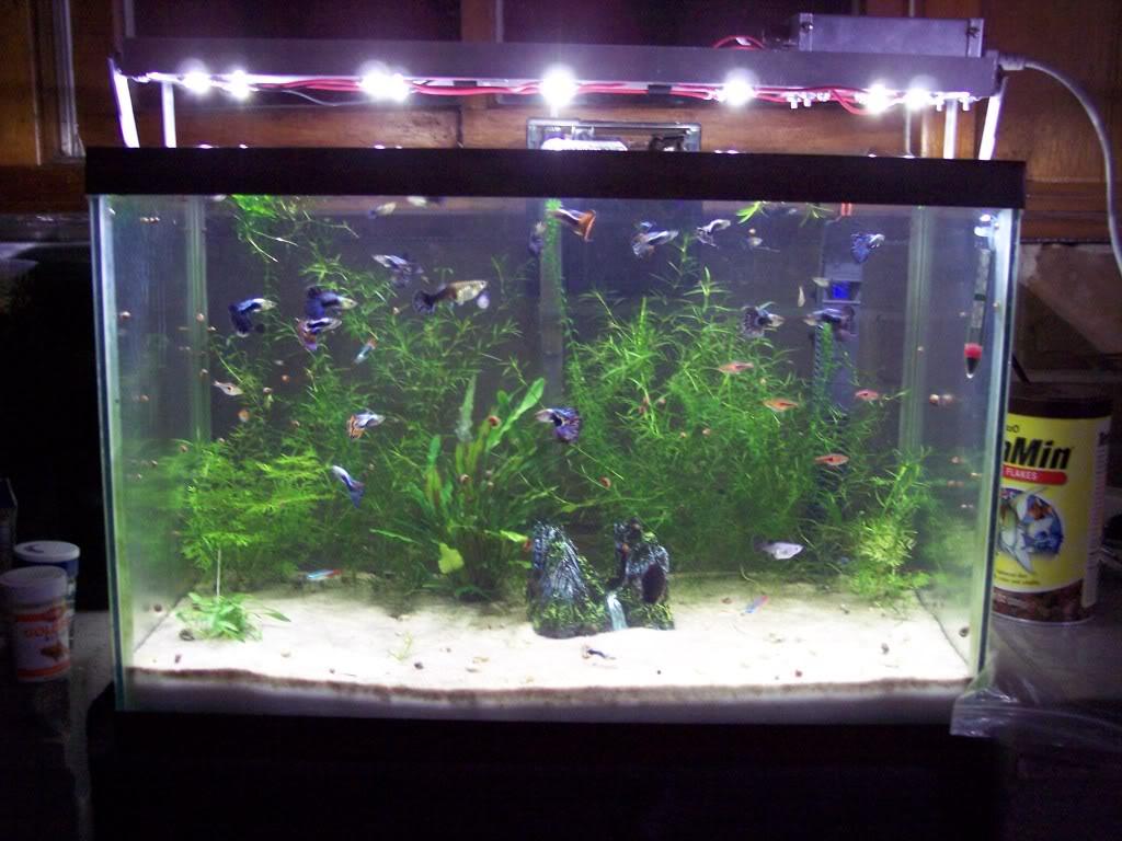 Led light planted aquarium iron blog for Led fish tank lights