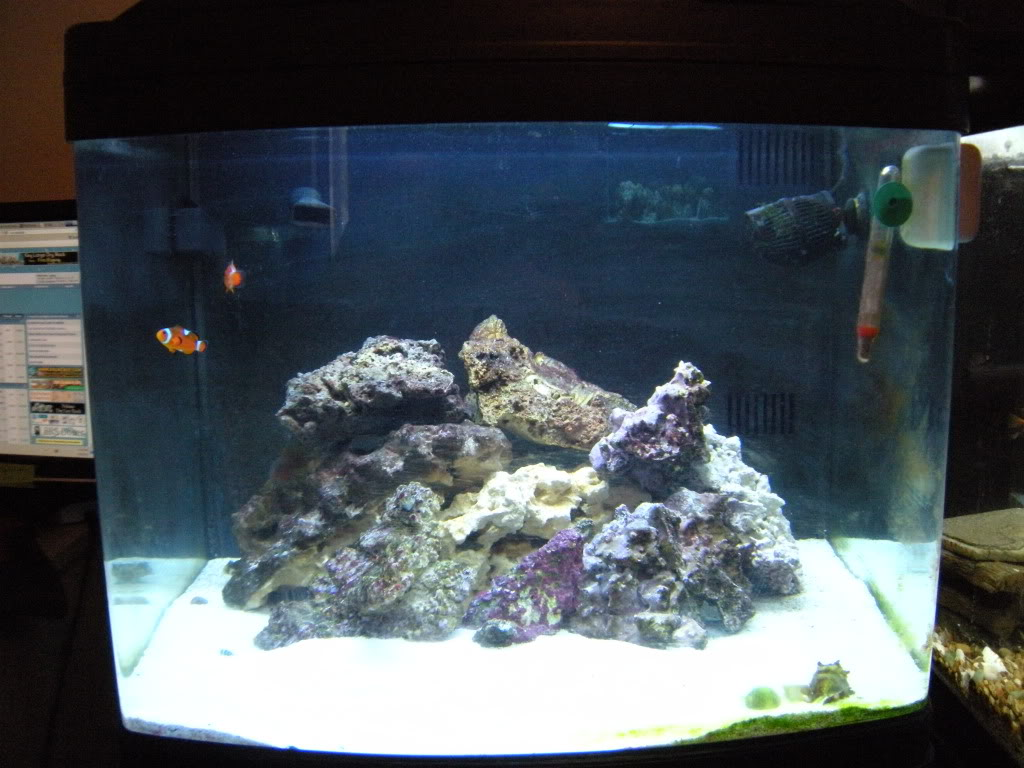 My First Saltwater Tank Aqueon 36 Gallon Bowfront