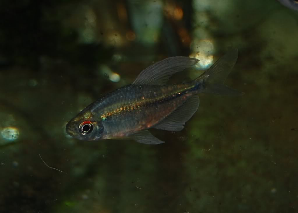 For sale ready for shipping fish and invertebrates 2012 for Community fish list