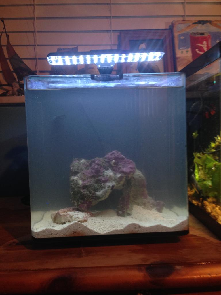 10 gallon fish tank stand petco top fin aquarium starter for 10 gallon fish tank kit