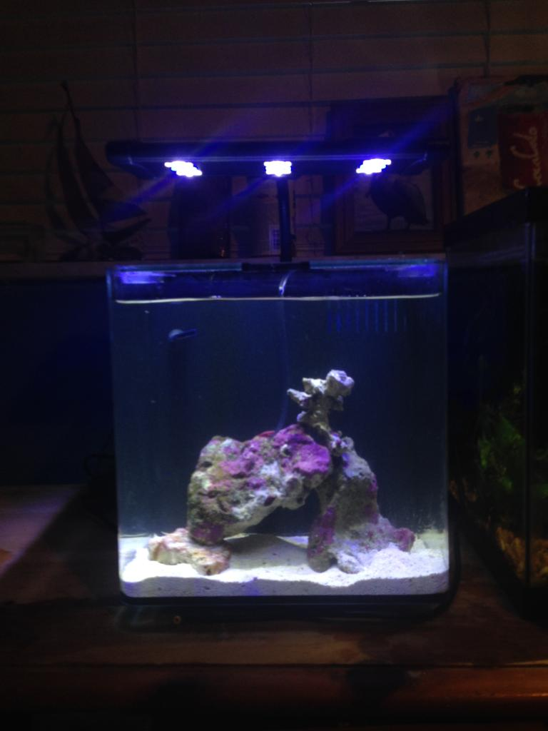 20 gallon fish tank stand petco more options available for Bookshelf fish tank