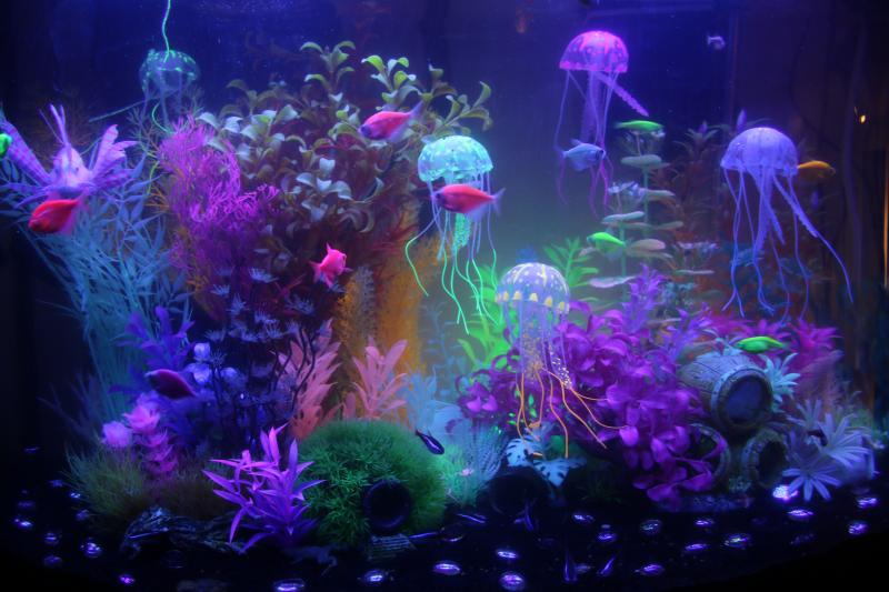 chasing glofish advice aquarium advice aquarium forum