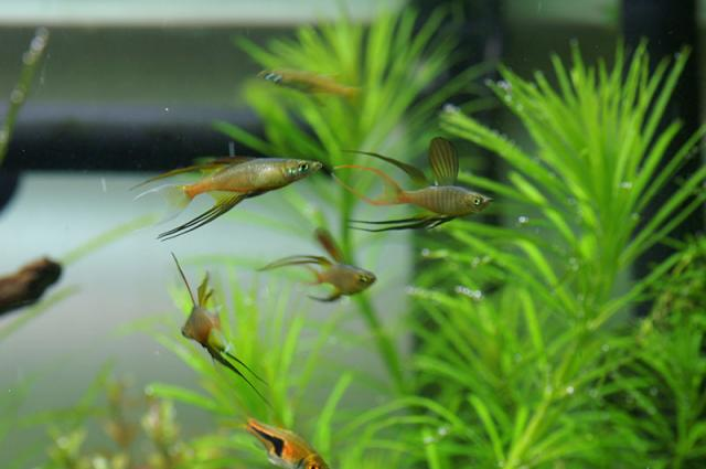 For Sale: CPD, several Cory Types, Some shrimp and other ...
