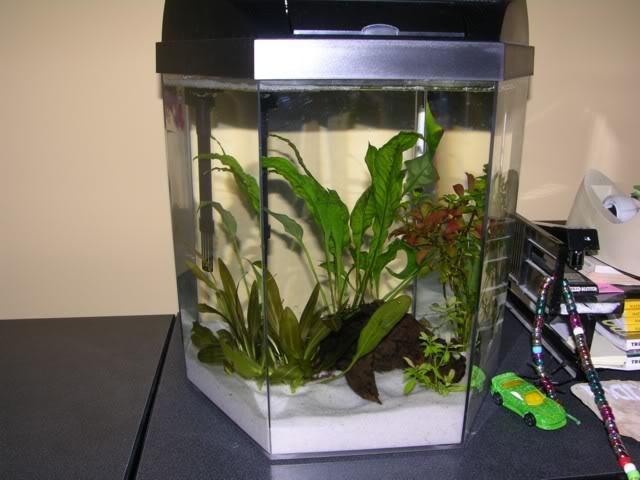 Glass hexagon aquarium 1000 aquarium ideas for 55 gallon hexagon fish tank