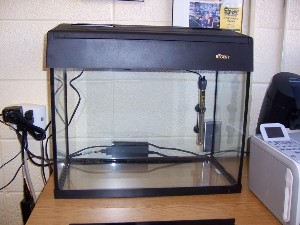 12 gallon eclipse stocking aquarium advice aquarium for Eclipse fish tank