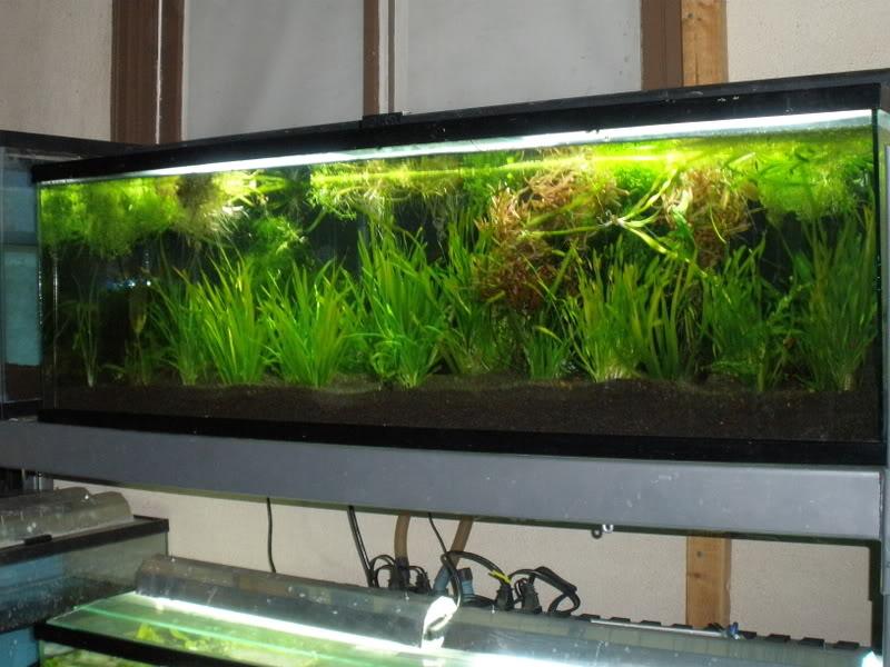 60 gallon aquarium for sale 1000 aquarium ideas for 60 gallon fish tank