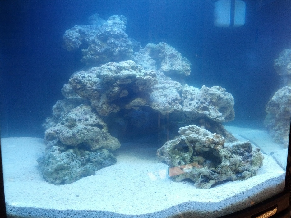 Click image for larger version  Name:aquascape pic.jpg Views:54 Size:250.5 KB ID:100891