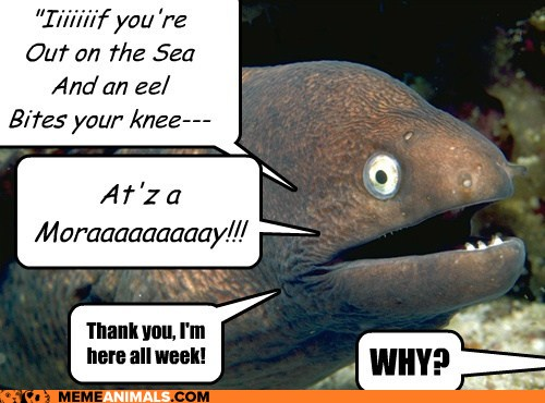 Click image for larger version  Name:EEL.jpg Views:325 Size:52.9 KB ID:101699