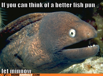Click image for larger version  Name:Minnow EEL.jpg Views:225 Size:59.3 KB ID:101705