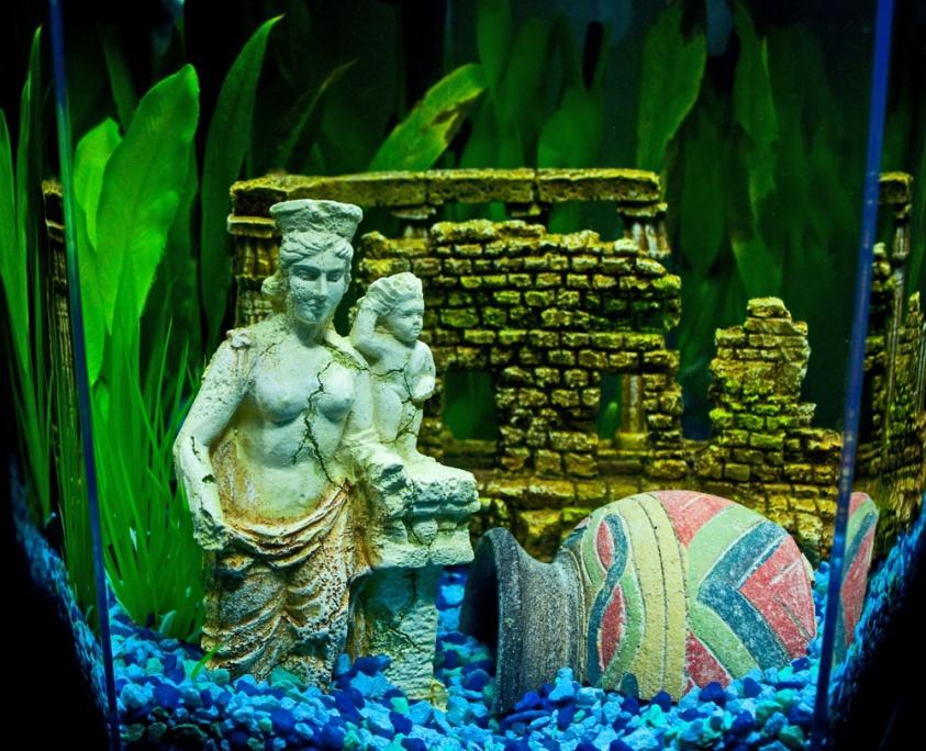 Click image for larger version  Name:aquarium 7-27-12 small2.jpg Views:175 Size:264.3 KB ID:109464