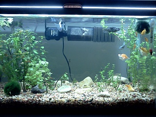 Click image for larger version  Name:Ludwigia_tank.jpg Views:50 Size:257.9 KB ID:112292