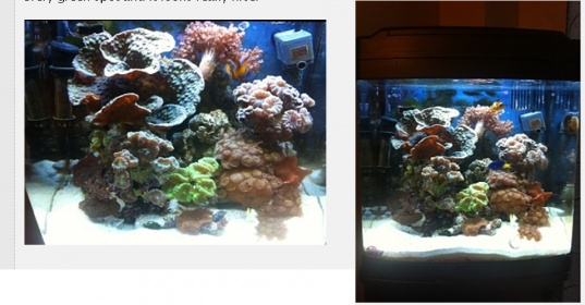 Click image for larger version  Name:biocube_coral.jpg Views:81 Size:65.5 KB ID:112700