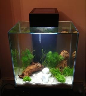 5 gallon tank stocking options for 10 gallon fish tank stocking ideas
