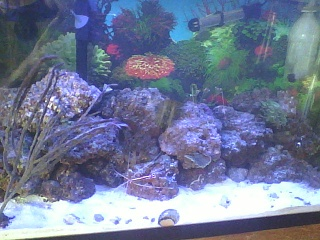 Click image for larger version  Name:my tank.jpg Views:98 Size:93.2 KB ID:113633