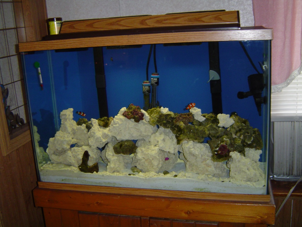 Click image for larger version  Name:45 gallon full shot.jpg Views:114 Size:223.2 KB ID:114721