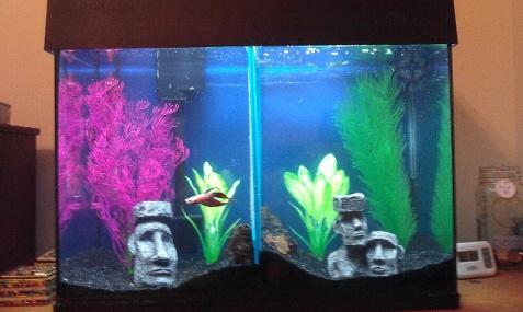 29 gallon aquarium stocking options