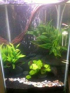 Stocking ideas for 15 gallon tall aqueon aquarium for 10 gallon fish tank stocking ideas
