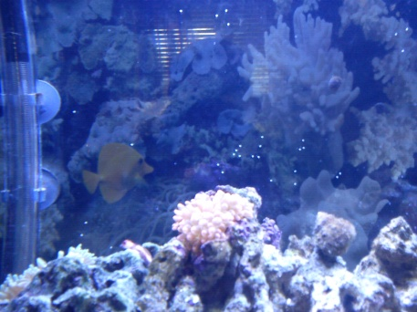 saltwater aquarium white spots on glass