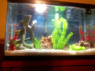 29 gallon aquascape aquarium advice aquarium forum for 29 gallon fish tank dimensions