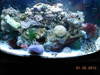 Click image for larger version  Name:fishsalt 021.jpg Views:99 Size:254.5 KB ID:117089