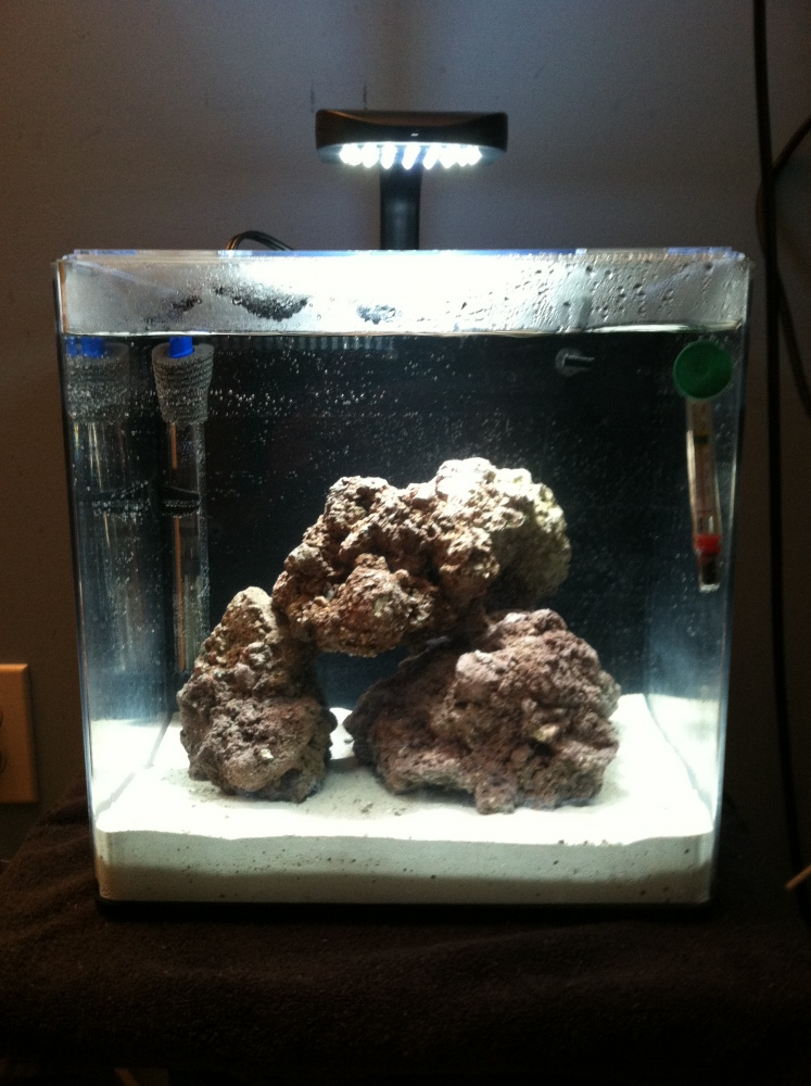 Click image for larger version  Name:Saltwater tank.jpg Views:36 Size:230.8 KB ID:119709