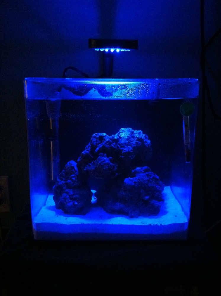 Click image for larger version  Name:Saltwater tank 2.jpg Views:40 Size:188.4 KB ID:119710
