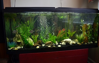Click image for larger version  Name:Fish Tank 008.jpg Views:79 Size:222.7 KB ID:119779