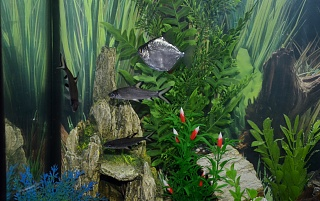 Click image for larger version  Name:Fish Tank 013.jpg Views:79 Size:249.3 KB ID:119780