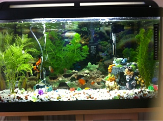 Cloudy water aquarium advice aquarium forum community for Cloudy water in new fish tank