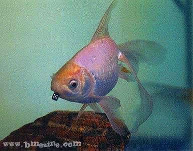 Click image for larger version  Name:pfish.jpeg Views:235 Size:16.7 KB ID:123637