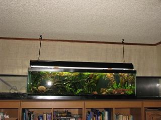 New Shrimp Tank Aquarium Advice Forum Munity