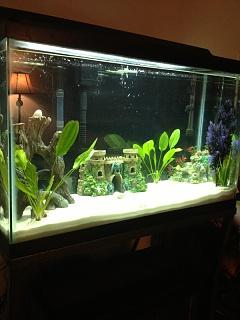 29 gallon stocking ideas aquarium advice aquarium for 10 gallon fish tank stocking ideas