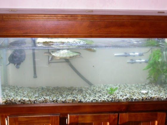Click image for larger version  Name:New Tank.jpg Views:53 Size:75.6 KB ID:12594