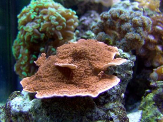 Click image for larger version  Name:aquarium 050 585x438.jpg Views:41 Size:97.5 KB ID:12636