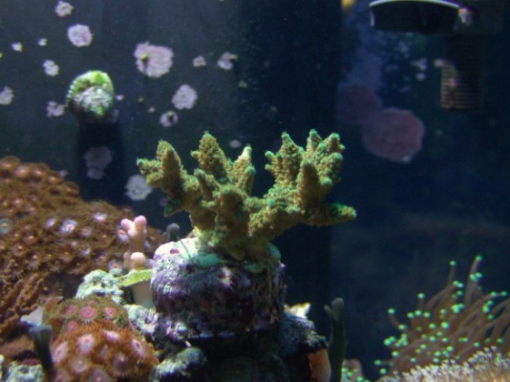 Click image for larger version  Name:aquarium 062 585x438.jpg Views:48 Size:76.2 KB ID:12638