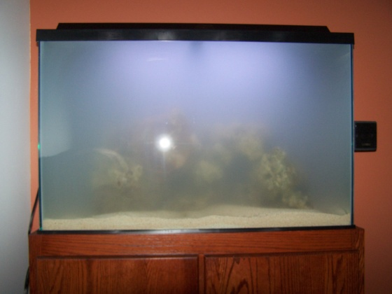 Click image for larger version  Name:Salt Water Tank Day 1 005.jpg Views:55 Size:50.1 KB ID:12685