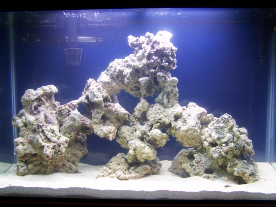 Click image for larger version  Name:Salt Water Tank day 2 004.jpg Views:52 Size:93.8 KB ID:12687