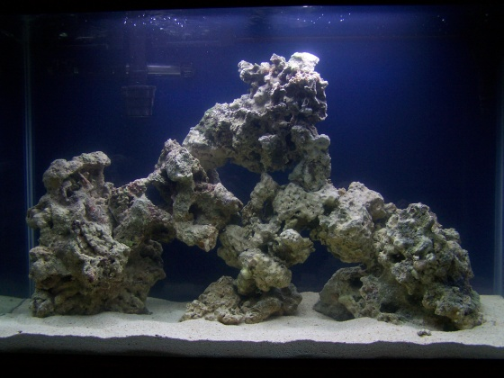 Click image for larger version  Name:Salt Water Tank day 2 006.jpg Views:55 Size:85.4 KB ID:12688
