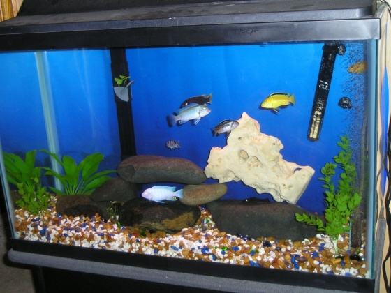 Click image for larger version  Name:30Gallon2.jpg Views:47 Size:99.8 KB ID:12805