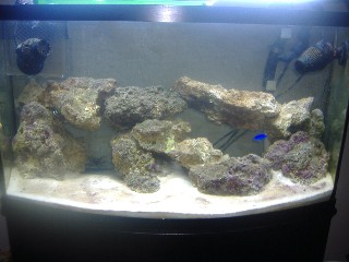 Name:   march o8 fish tank Small Web view.jpg Views: 104 Size:  27.6 KB