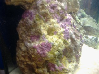 Name:   march o8 fish tank 001 Small Web view.jpg Views: 116 Size:  26.9 KB