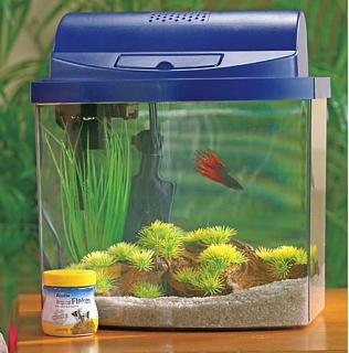 For sale aqueon 2 5 gallon with divider aquarium advice for Fish tank divider 5 gallon