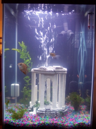 Click image for larger version  Name:Fish Tank after real plants reduced.jpg Views:168 Size:54.0 KB ID:13204