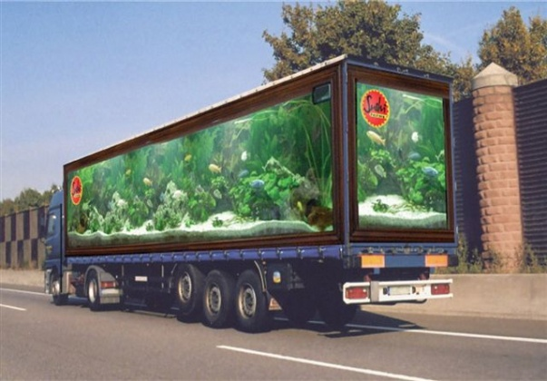 Click image for larger version  Name:FISH TRUCK.jpg Views:56 Size:91.1 KB ID:13269