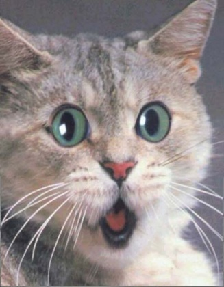 Click image for larger version  Name:scared cat.jpg Views:47 Size:47.9 KB ID:13440