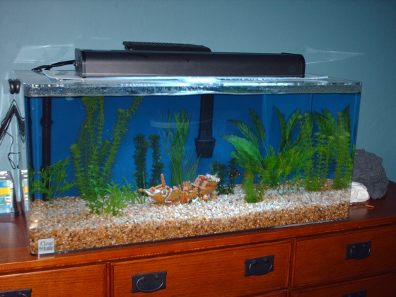 Click image for larger version  Name:New tank.jpg Views:53 Size:96.8 KB ID:13496